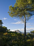 Mediterranean Landscape Stock Photography