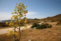 Mediterranean landscape. Landscape on the small Sardinian island, the Asinara Royalty Free Stock Image