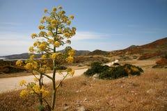 Mediterranean landscape. Landscape on the small Sardinian island, the Asinara royalty free stock image