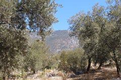 Mediterranean Landscape Stock Image