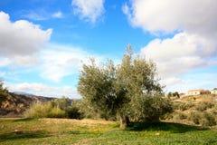 Mediterranean landscape, Spain Royalty Free Stock Photo