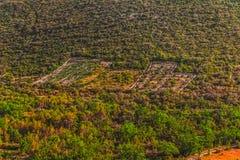 Mediterranean machia landscape Stock Images