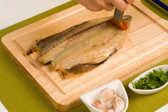 Mediterranean mackerel Stock Photography