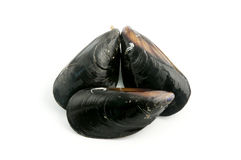 Mediterranean mussels stock photos