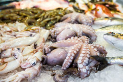 Mediterranean octopus Royalty Free Stock Photo
