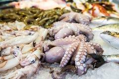 Mediterranean octopus Royalty Free Stock Photo