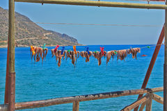 Mediterranean Octopus on the rope, preparing for cooking. Greece island Crete. Sea, sunny day Stock Photo