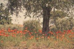 Mediterranean orchard Royalty Free Stock Image