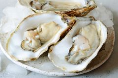 Mediterranean oysters on a light background with ice. Sea delicacy. Mediterranean oysters on a dark background with ice and lemon slices. Sea delicacy Stock Photos