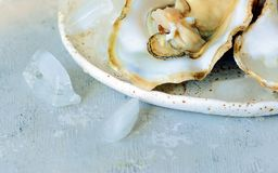 Mediterranean oysters on a light background with ice. Sea delicacy. Mediterranean oysters on a dark background with ice and lemon slices. Sea delicacy Royalty Free Stock Images