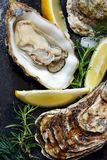 Mediterranean oysters on a dark background with ice and lemon slices. Sea delicacy. Open oysters Stock Images