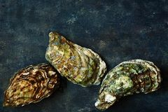 Mediterranean oysters on a dark background. Sea delicacy. Texture Royalty Free Stock Photo