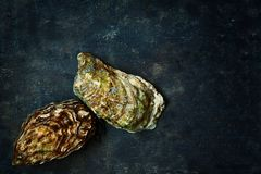 Mediterranean oysters on a dark background. Sea delicacy. Texture Stock Photos