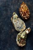 Mediterranean oysters on a dark background. Sea delicacy. Texture Stock Photography