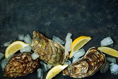 Mediterranean oysters on a dark background with ice and lemon slices. Sea delicacy. Mediterranean oysters on a dark background. Sea delicacy. Texture Stock Image