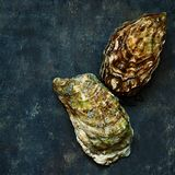 Mediterranean oysters on a dark background. Sea delicacy. Texture Royalty Free Stock Photography