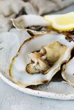 Mediterranean oysters on a light background with ice. Sea delicacy. Mediterranean oysters on a dark background with ice and lemon slices. Sea delicacy Stock Photo