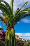 Mediterranean palm with sky at background Stock Image