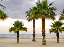 Mediterranean palm trees Royalty Free Stock Photography