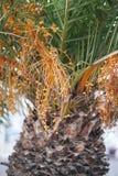 Mediterranean palm Stock Images
