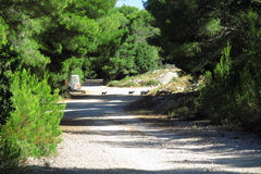 Mediterranean path. The mediterranean path with sweet little goats stock photo
