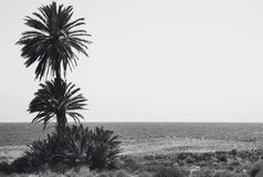 Mediterranean pebble beach and palm trees in Almeria. Spain. Mediterranean pebble beach an palm trees in Almeria. Spain. Horizontal Stock Image