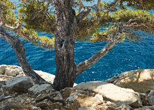 Mediterranean pine in calanque of Cassis, France. Blue water and Mediterranean pine trees imn the bay of Calanque de Cassis, Mediterranean France, region PACA Stock Photo