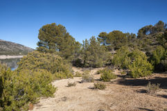 Mediterranean pine forest of Aleppo Pine Royalty Free Stock Photography