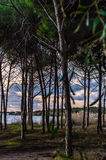 Mediterranean pine forest with the sea in the background. A Mediterranean pine forest with the sea in the background and a cloudy sky Royalty Free Stock Photography