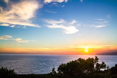 Mediterranean pine silhouette against a  sunset. Royalty Free Stock Photos