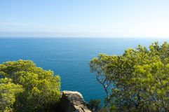 Mediterranean pine trees. Against the background of the ocean Royalty Free Stock Images