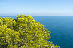 Mediterranean pine trees. Against the background of the ocean Stock Photo