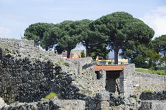 Mediterranean Pine Trees Overlooking Pompeii, Italy. Several Mediterranean Pine trees overlook the ancient ruins of Pompeii.  The city, located near present day Stock Photos