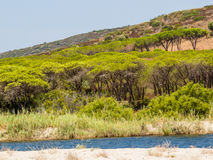 Mediterranean pine trees. Typical Mediterranean landscape with stone pine trees and Posada River in Orvile, Sardinia, Italy Stock Image