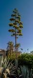 Mediterranean pine Stock Image