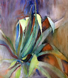 Mediterranean plant painted by watercolor.  Stock Photography