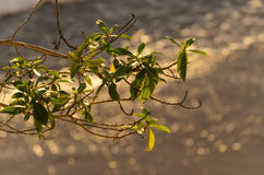 Mediterranean. Plant at sunset with mediterranean sea in the background Royalty Free Stock Photos