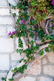 Mediterranean plant on wall Stock Image