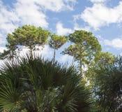 THE MEDITERRANEAN PLANTS Stock Photos