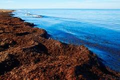 Mediterranean Posidonia beach in alicante Denia Stock Photos