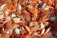 Mediterranean red crab pattern seafood texture Stock Photos