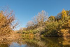 Mediterranean river in autumn vegetation. The pristine Congost river in northeastern Catalonia with its characteristic riverine vegetation in autumn colors Stock Photography