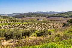 Mediterranean rural landscape, Israel Stock Photography