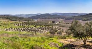 Mediterranean rural landscape, Israel Stock Image