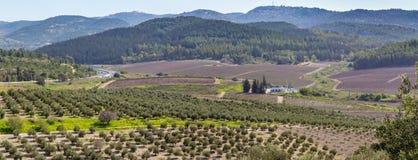 Mediterranean rural landscape, Israel Royalty Free Stock Photo