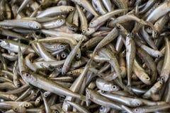 Mediterranean sand smelt fishes background. Royalty Free Stock Image