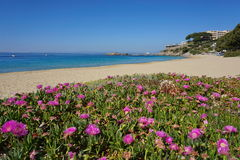 Mediterranean sandy beach with flowers Roses Spain Royalty Free Stock Photo