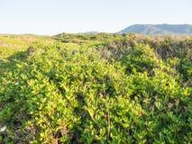 Mediterranean scrub leafs sky Stock Image