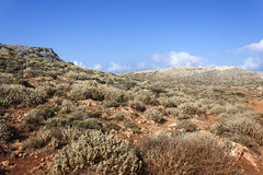 Mediterranean scrub on a mountain of Crete Royalty Free Stock Image