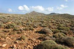 Mediterranean scrub on a mountain of Crete Royalty Free Stock Image